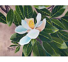 Magnolia Blossom ~ Original Oil Painting Photographic Print