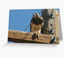 Hawk, Swainson's with prey Greeting Card