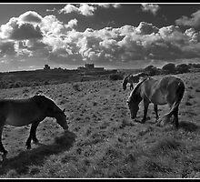 A horses view of Dover castle by Shaun Whiteman