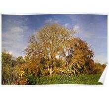 Autumnal colour's. Poster