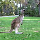 Kangaroo with Joey by Mike Paget