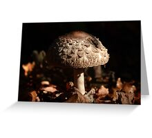 Focus on the Forest Floor Greeting Card