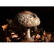 Focus on the Forest Floor Photographic Print