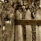 Toned Gate by Kelvin Hughes