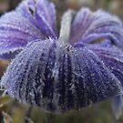Frost Bit Blue by Tracy Wazny