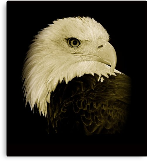 Bald Eagle by Louise Fahy