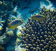 Maldivian coral reef by Atanas Bozhikov NASKO