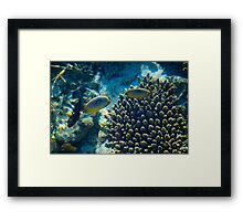 Maldivian coral reef Framed Print