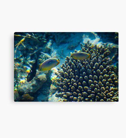 Maldivian coral reef Canvas Print