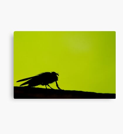 silhouette of a fly Canvas Print