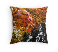 Clinging Colours Throw Pillow