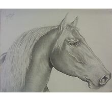 Horse drawing in canvas-like paper Photographic Print