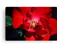 Altissmo Rose Canvas Print