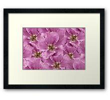 Goldrush - Rambling Rose Framed Print