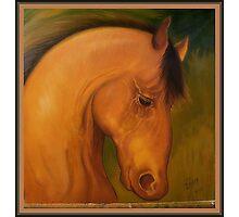 A strong horse head portrait Photographic Print