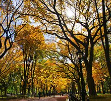Fall in Central Park by TrinityShot