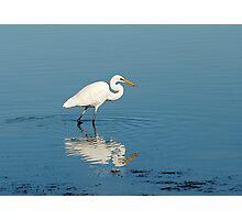 White Heron at Lake Illawarra Photographic Print