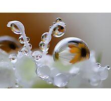 Daisy bubbles Photographic Print