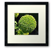 ball of green Framed Print