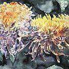 chrysanthemum flower watercolour painting by derekmccrea