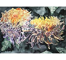 chrysanthemum flower watercolour painting Photographic Print