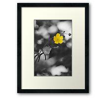 Buttercup Framed Print