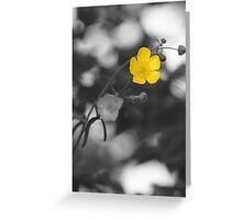 Buttercup Greeting Card