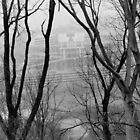 Neyland Stadium 2 by Brian Murray