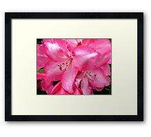 Touched by the morning rain. Framed Print