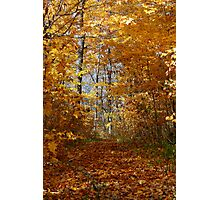 Hawthorn Hollow Woods Photographic Print