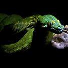 Serpent in the Darkness by jskouros
