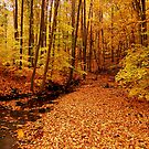 Into the Woods by Sandy Woolard