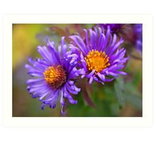 Fall Asters Art Print