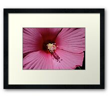 Pink Hibiscus Close Up Framed Print