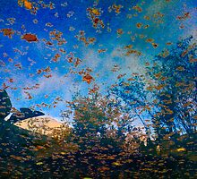 iPhone Reflection Photography by Jon Yager