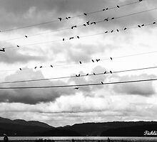 Birdies On The Wire by ticklisharbour
