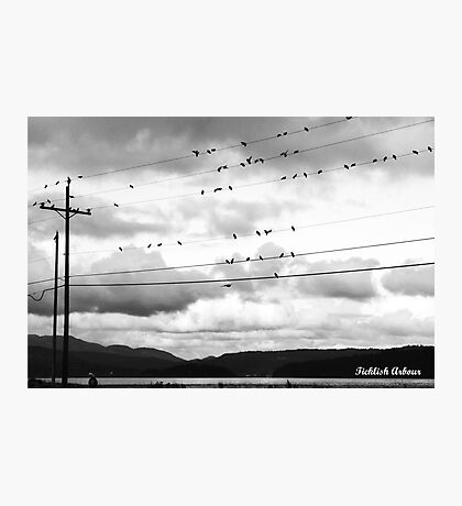 Birdies On The Wire Photographic Print