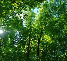 Canopy by RichardGibb