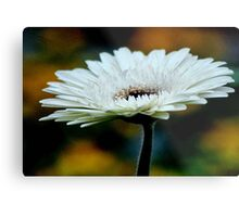 GERBERA IN WHITE - Gerbera in WIT Metal Print