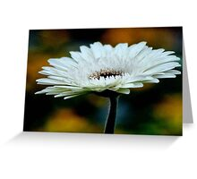GERBERA IN WHITE - Gerbera in WIT Greeting Card