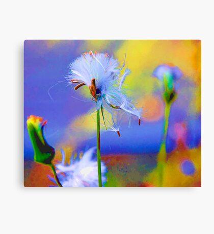 Fluff Canvas Print