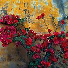 Mission Wall And Bougainvillea by Larry Costales