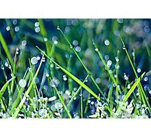 Gorgeous Green Bokeh Morning Photographic Print