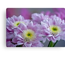 Pretty Chrysanthemums Canvas Print