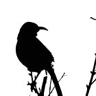 Curved Bill Thrasher Silhouette by Winona Sharp