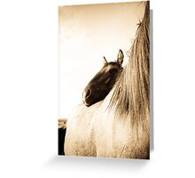 Sorraia Filly and Mare Greeting Card