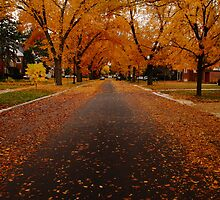 Fall in the Suburbs by Ilana Brumble