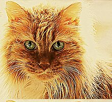 Marmalade Cat With Curvy Whiskers by Jean Gregory  Evans