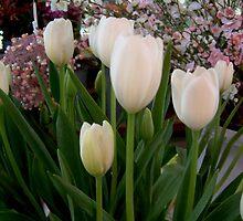 Tulips by Ilunia Felczer