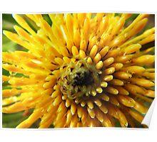 Yellow bush bloom - Pierces Pass Poster